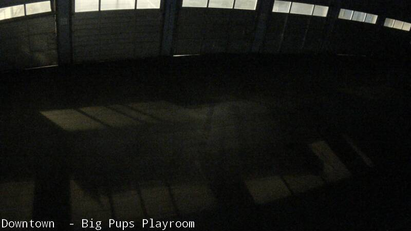 Lucy's Doggie Daycare Webcam